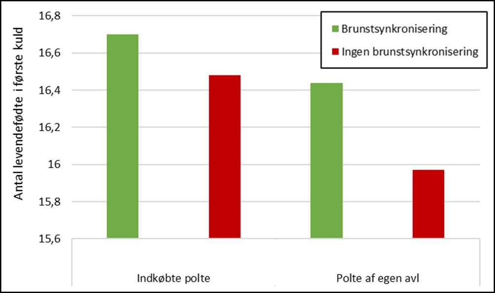 Antal levendefødte i første kuld med og uden brunstsynkronisering
