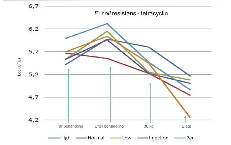 E.coli resistens - tetracyclin